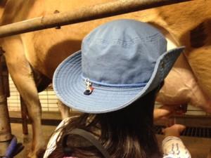 ジャージー牛の乳しぼり体験。手で受けたミルクは温かくていい匂いがしました!